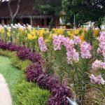 Orchid garden in Jenjarom